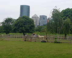 Rure in Urbs - Mudchute Farm, Isle of Dogs: Arc 2b
