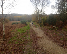 Chobham Heath: Arc 8b