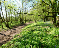 Spring on Ayot Greenway: Arc 12 outer