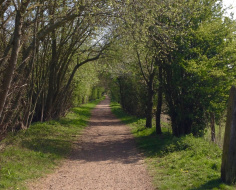 Enticing view down Cole Green Way: Arc 12 merged