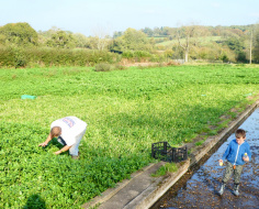 Watercress beds on the Chess: Spoke 9 E